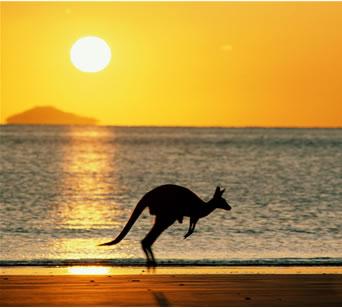 australia_kangaroo