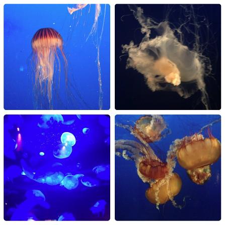 Jellyfish at The Vancouver Aquarium