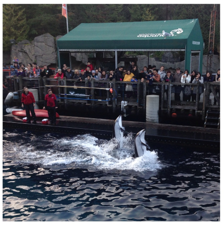Dolphin Show at the Vancouver Aquarium