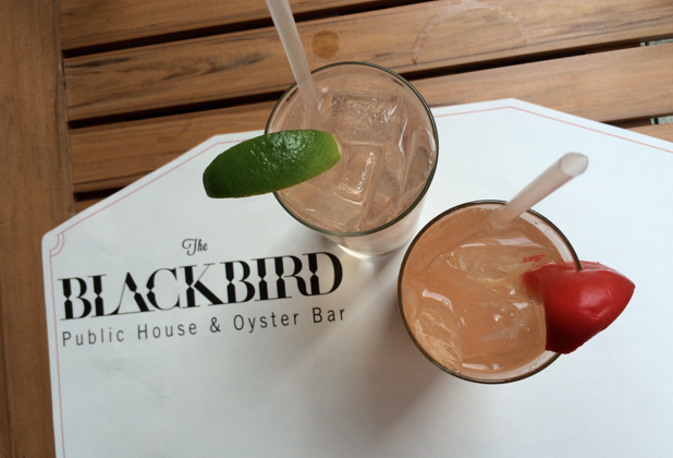blackbird donnelly drinks