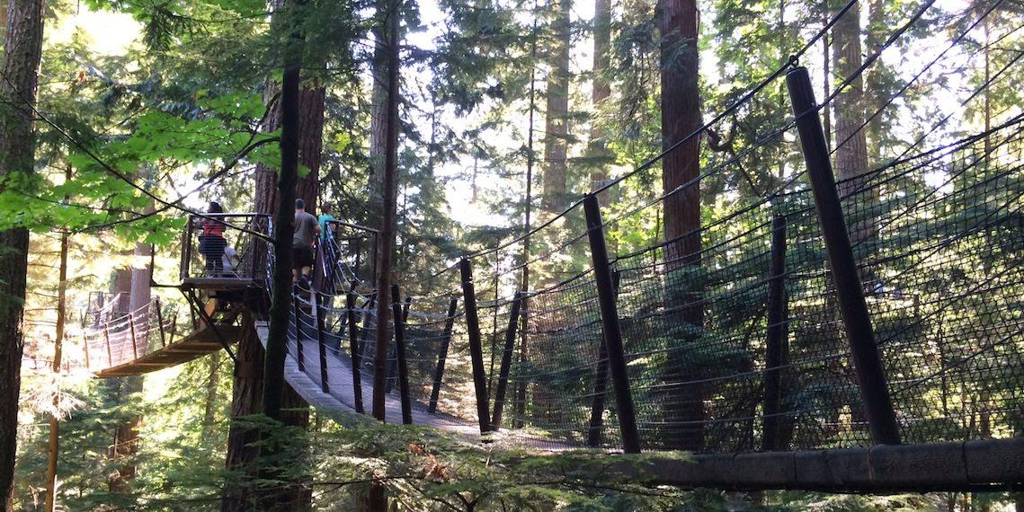 capilano suspension bridge park treetop adventures