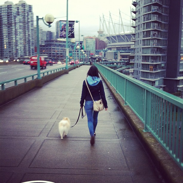 teddy bear cambie bridge
