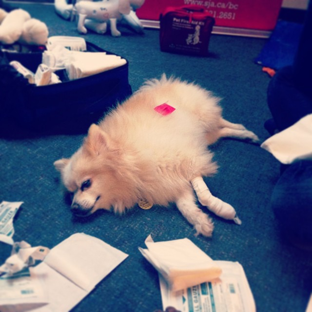 MMV - Pet First Aid St Johns