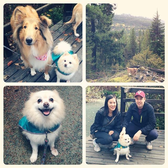 MMV Woof Weekend Hikes