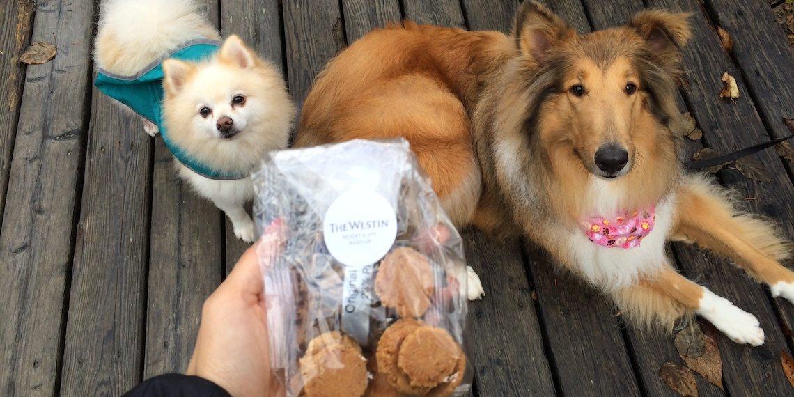 Woof Weekend Dog Cookies 2