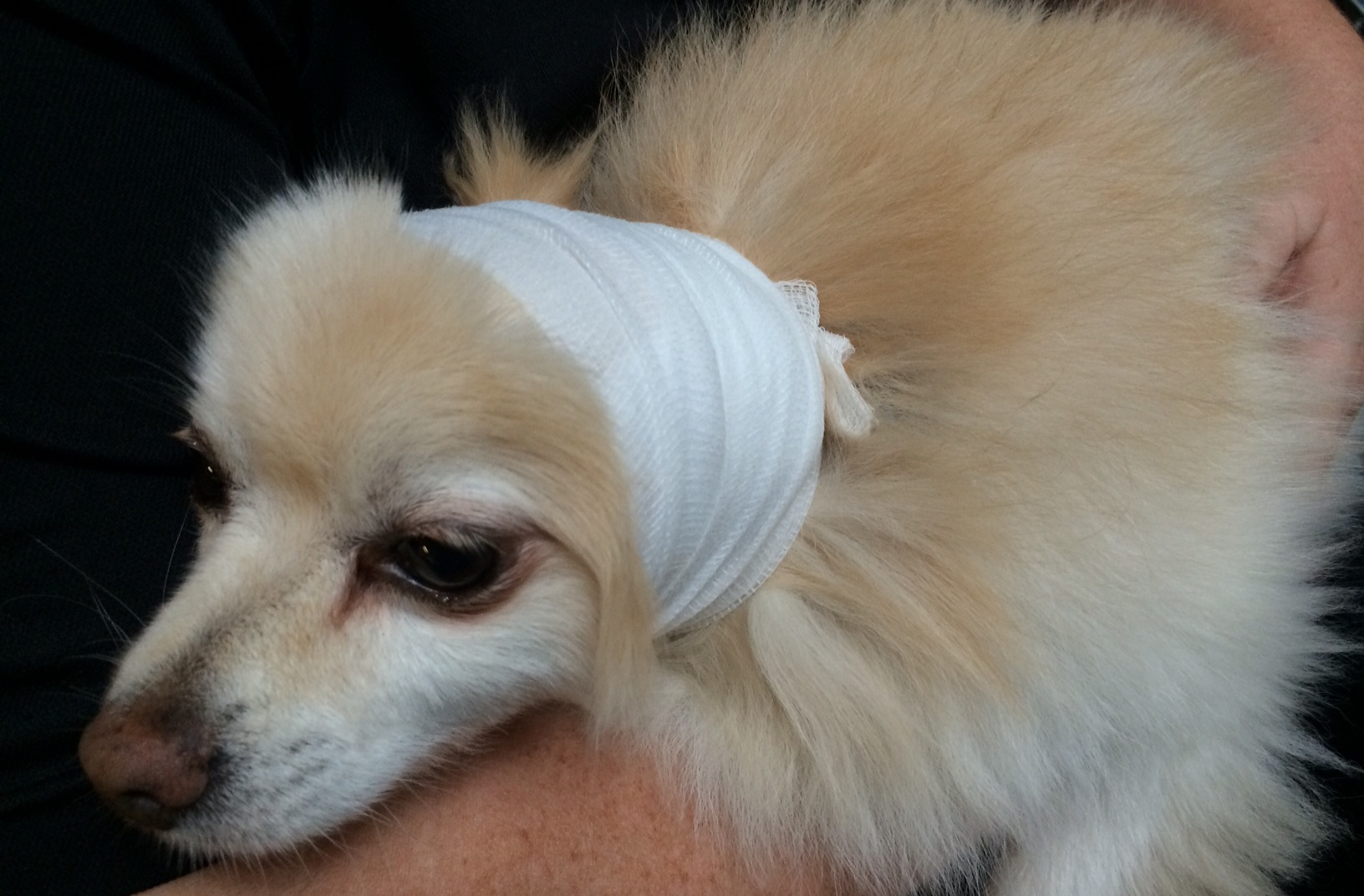 pet first aid vancouver st john 2