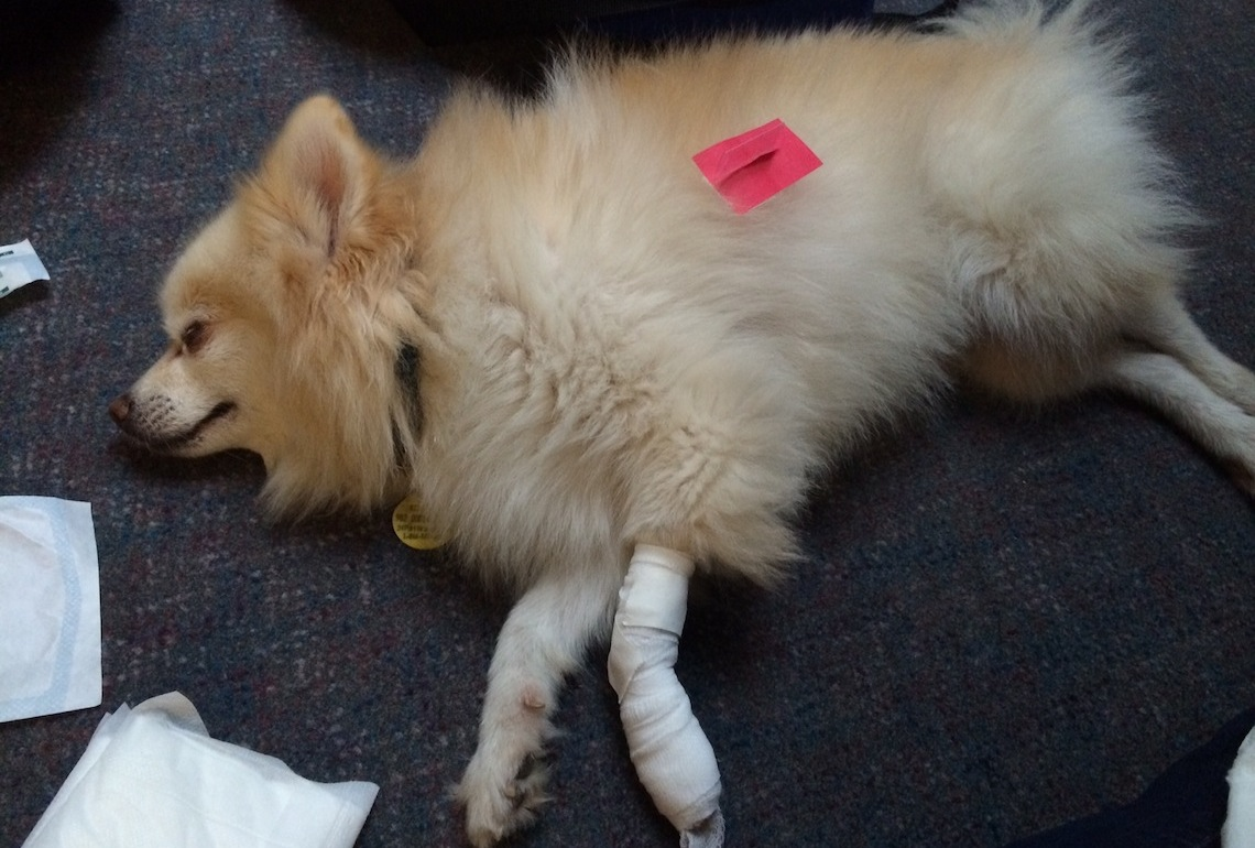 pet first aid vancouver st john 3