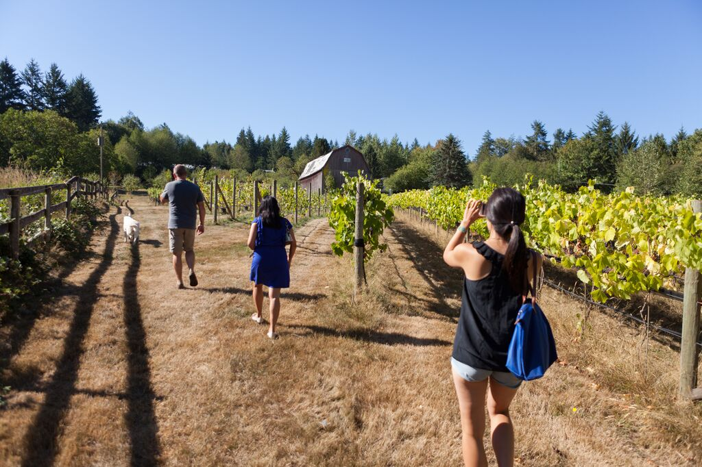 Vista D'Oro Winery
