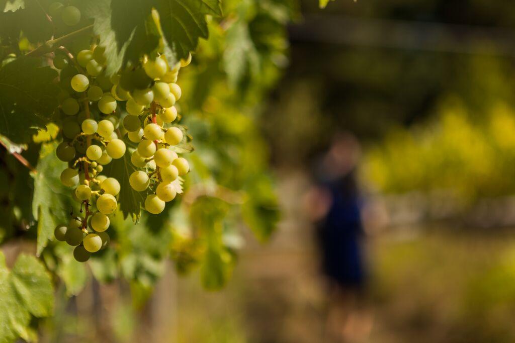 fraser valley winery vista d'oro langley 2