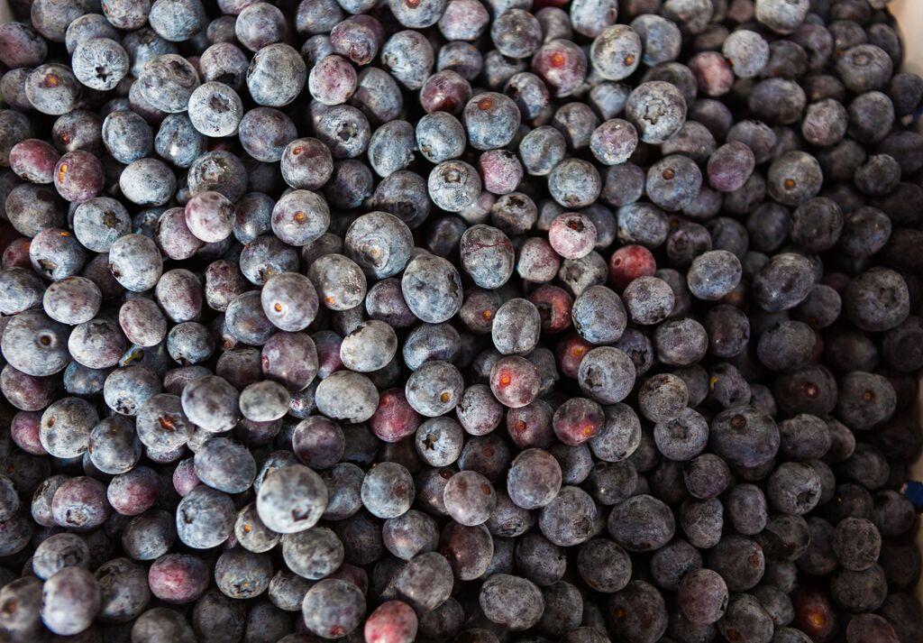 onnicks blueberry farm abbotsford 5