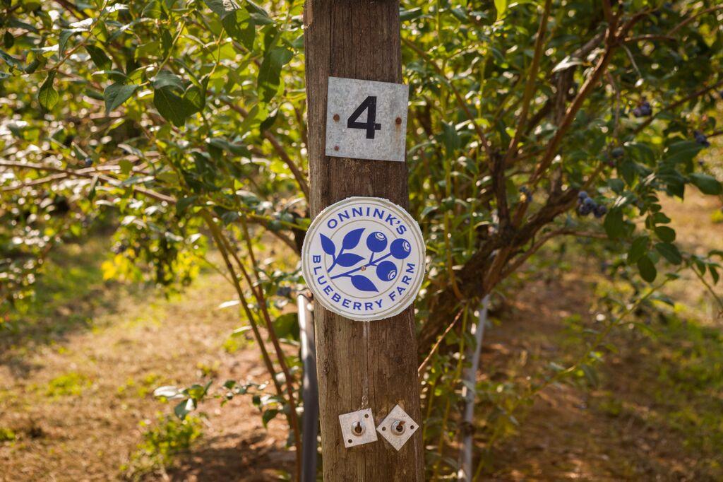 Onninks Organic Blueberry Farm Abbotsford