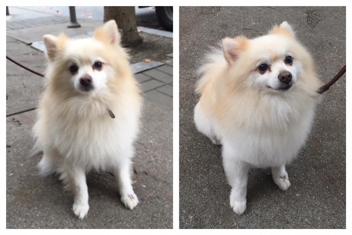 vancouver mobile dog grooming salon 1