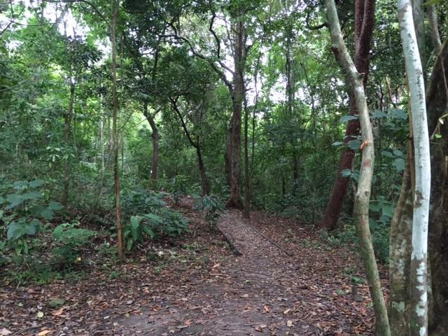 Parque Natural Metropolitano in Panama City 4