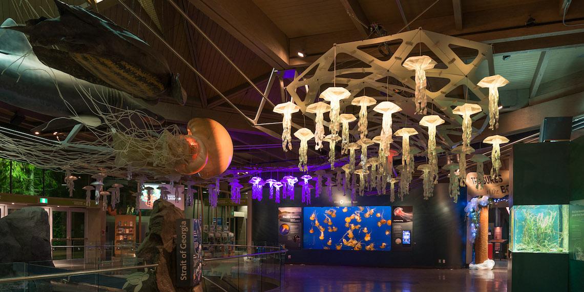 vancouver aquarium Jelly Swarm