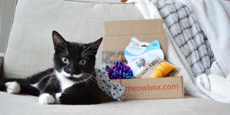 Meow Box: Subscription Box For Your Cat