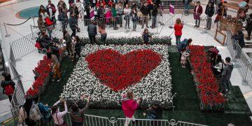 charity tulips display metrotown