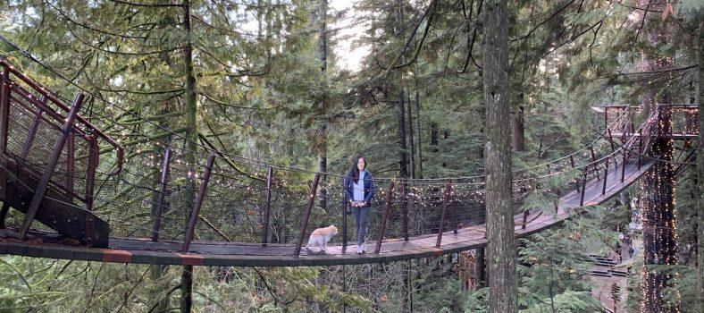 dog friendly capilano suspension bridge